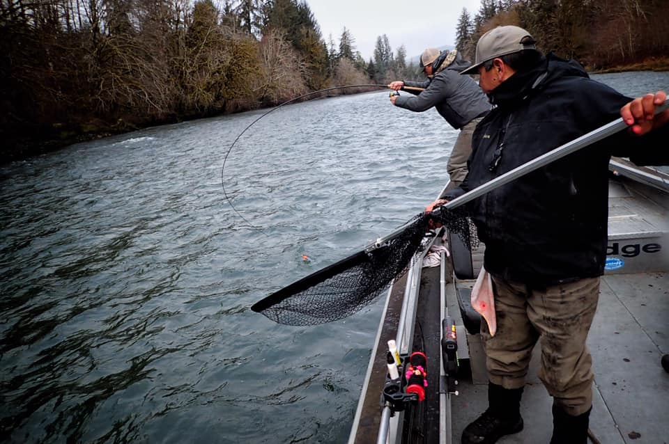 quinault fishing salmon trout steelheader