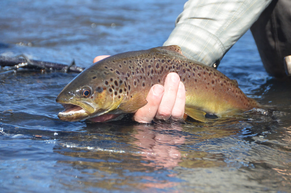 chile patagonia fly fishing trout brown rainbow nymph