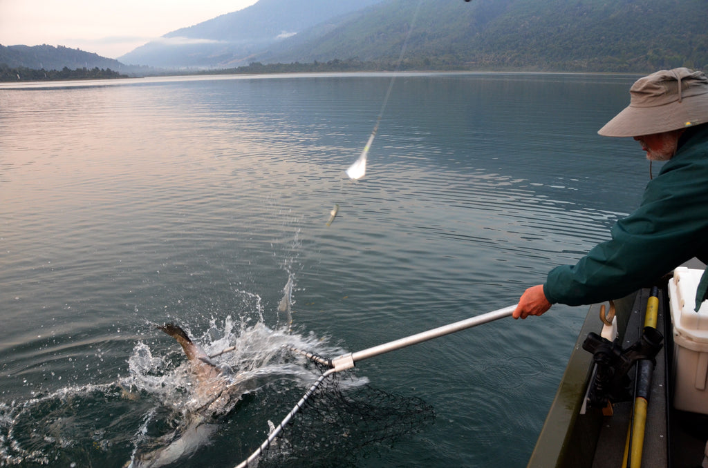 Netting 40 -60 pound salmon not only requires some skill it also requires muscle to hold the