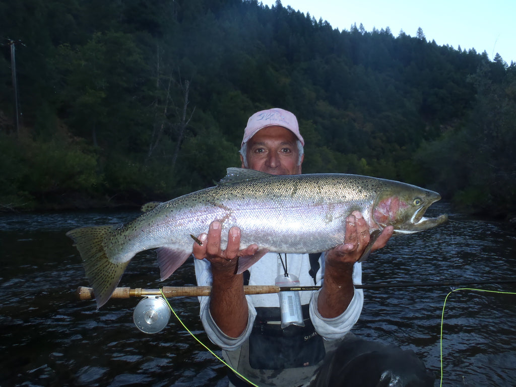 My first chromer on this spey rod What a grab...