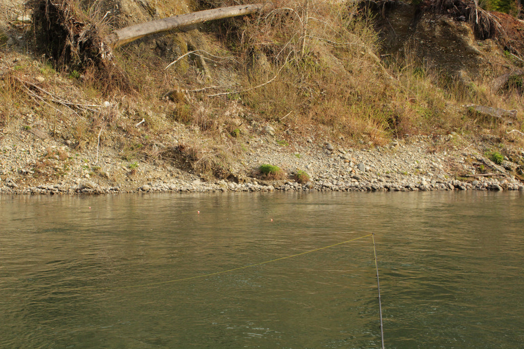 quinault fishing steelhead
