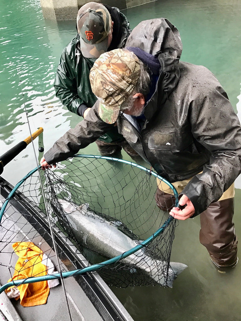 california fishing big native wild steelhead