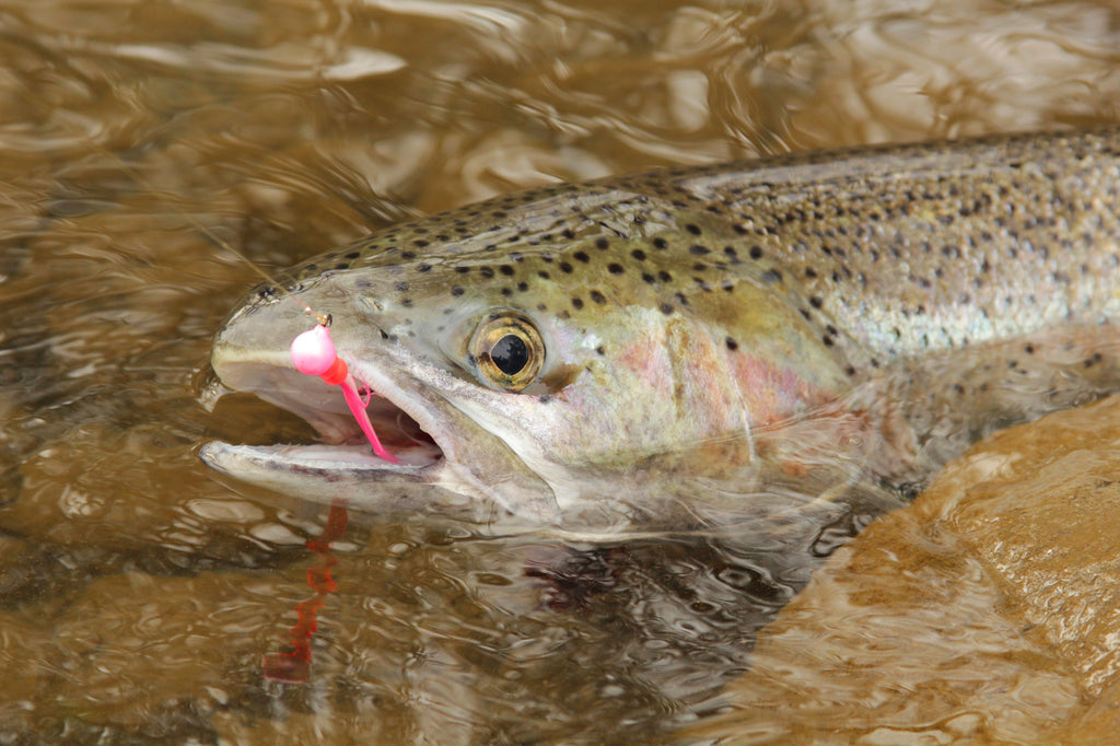 steelhead jig fishing