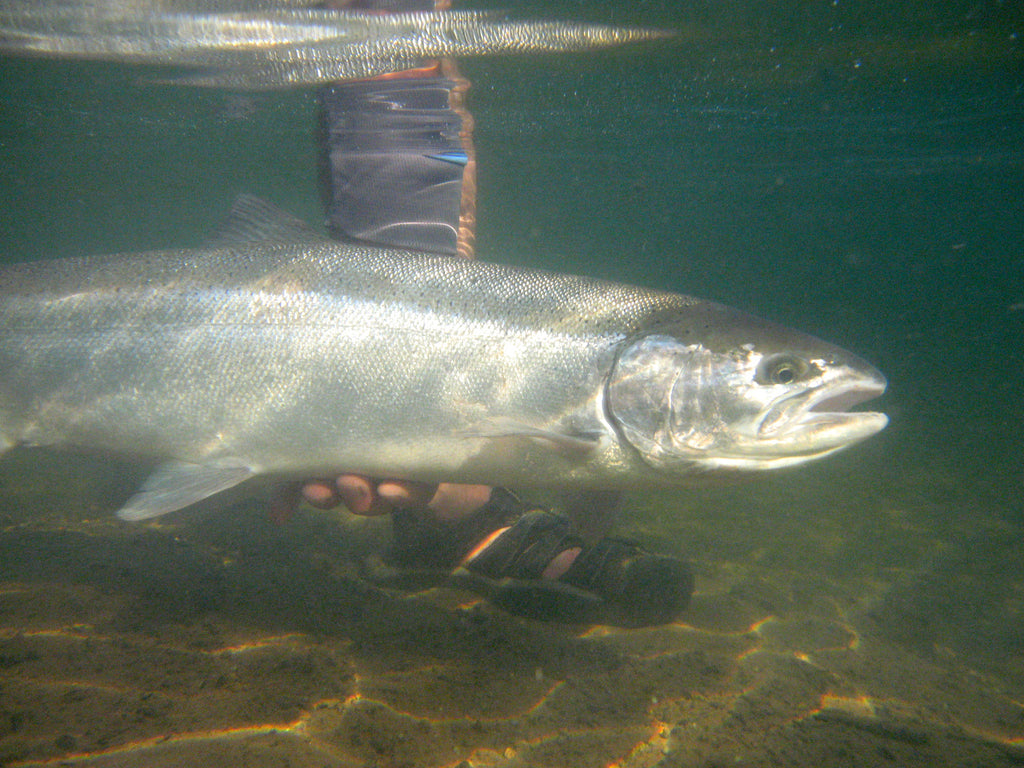 With summer steelhead season at its peak, take time to read the water and understand where fish hold and travel within any given section of the river.