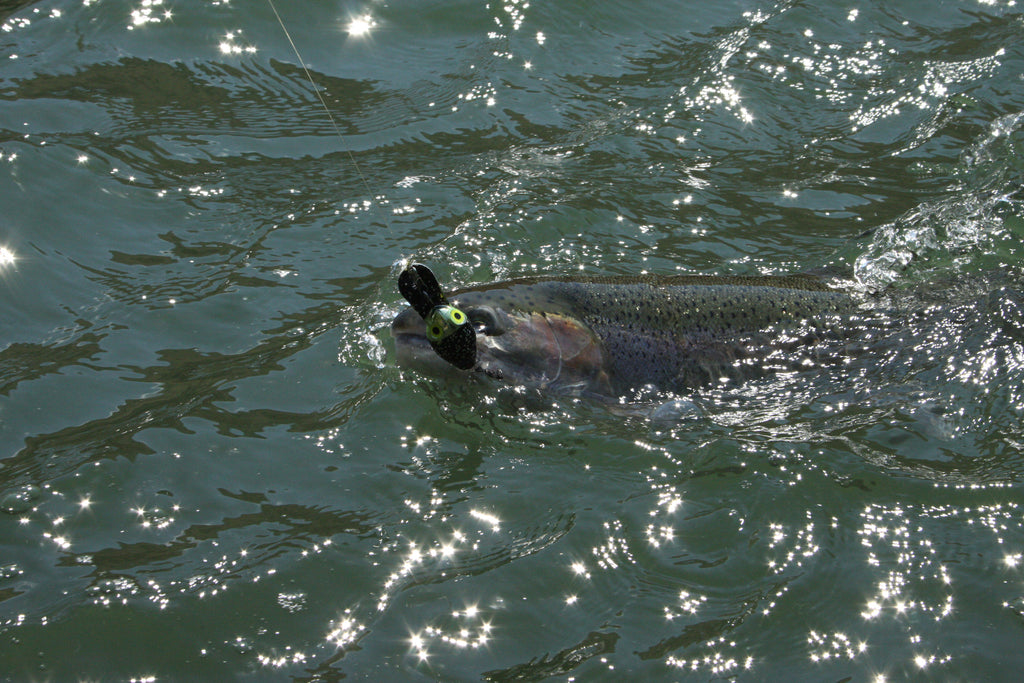Flatline tolling of plugs can be very effective when fishing the mouth of the Deschutes and Klickitat rivers. It works great for chinook, coho, even steelhead, shown here.
