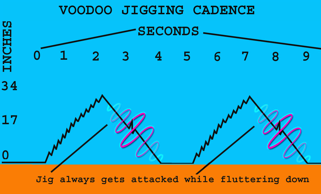 brown trout jigging cadence technique