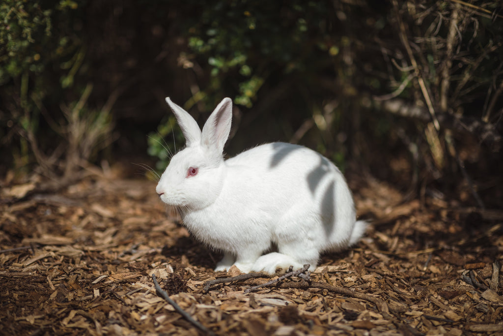 The update on animal testing and why Vatéa is about safe cosmetics