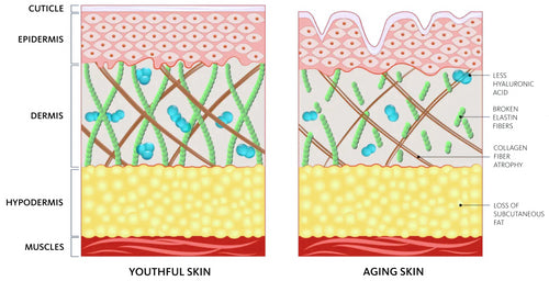 The Science behind Aging Skin and how La Luer Targets Aging Skin