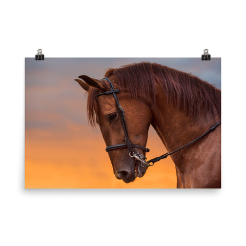 Horse In Sunset Poster