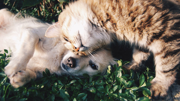Dog and Cat Care Tips to Remedy Arthritis and Aching Joints