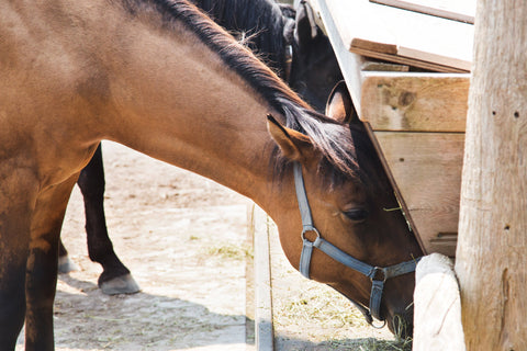 Bach Flower Remedies for horses