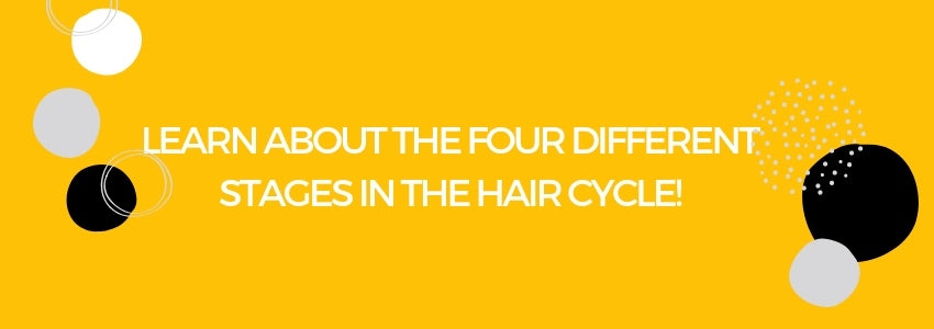 Learn About The Four Different Stages In The Hair Cycle!