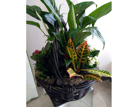 A8 - All Occasion Planter Basket