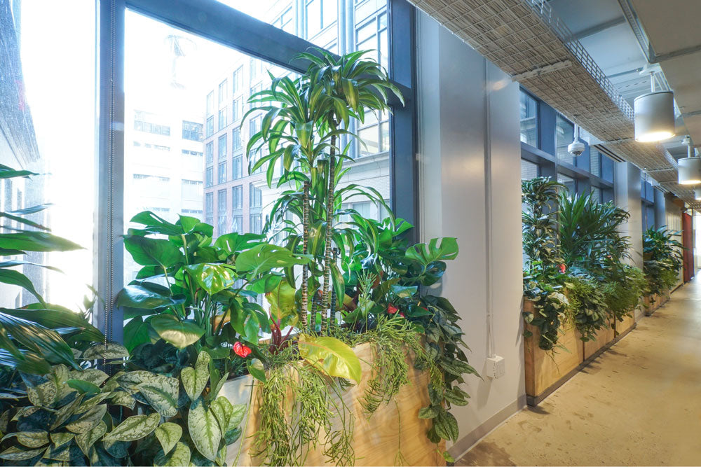 Office Plants at TED Talks HQ