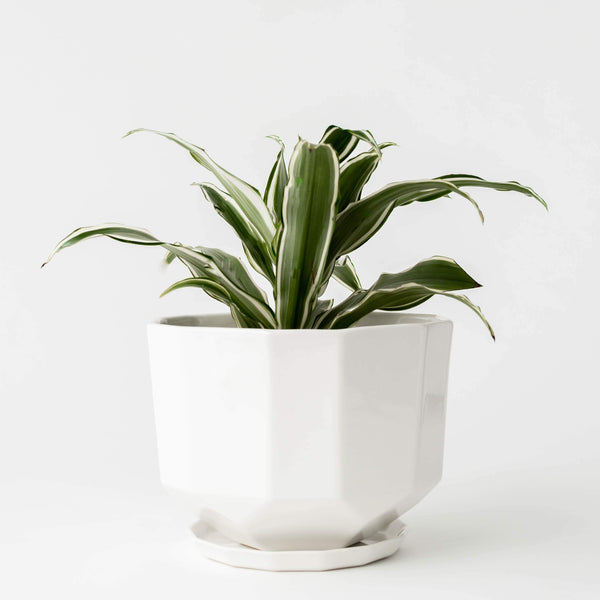 CONVIVIAL - Original Riveted Planter