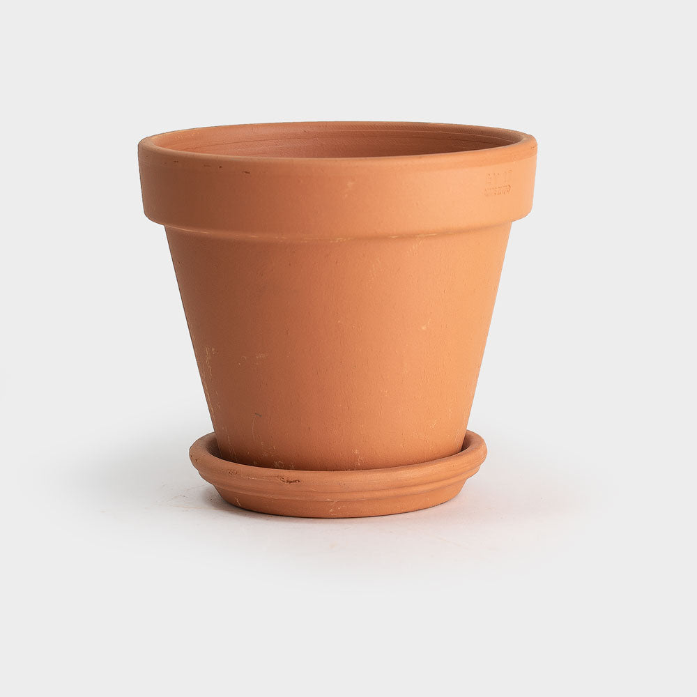 .Terracotta Pot and Saucer.: 6 1/2