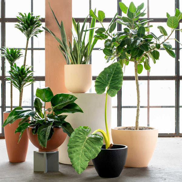 Large planters for houseplants