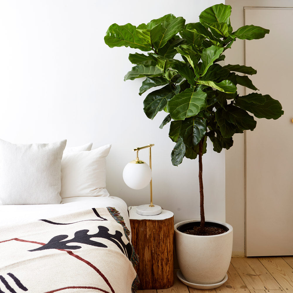 """Image result for plants tree at home"""",nari"""