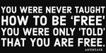 never taught how to be free bumper sticker 7.5""