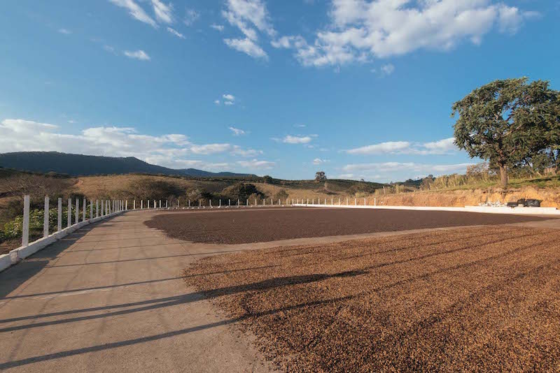 Natural process coffees drying in the sun