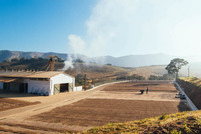 View of the coffee drying at Carmo Estate from a nearby hill