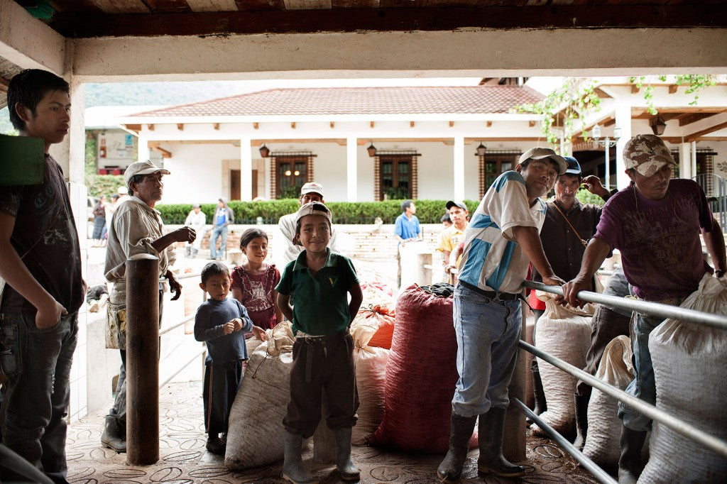 Pickers delivering cherry to wet mill at Finca El Injerto