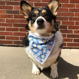 Blue Daisy Pet Bandanna