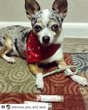Candy Cane Pet Bandanna