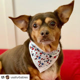 Dotted Stars Pet Bandanna