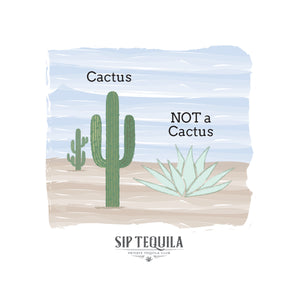 Agave is Not a Cactus
