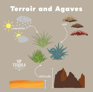 Terroir, Agaves, and Tequila