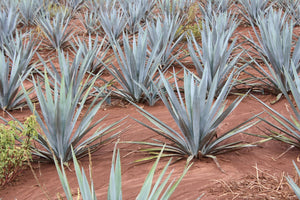 Agave Highlands