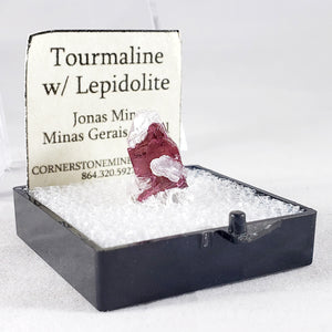 Tourmaline with Lepidolite Thumbnail Specimen from Jonas Mine, Brazil