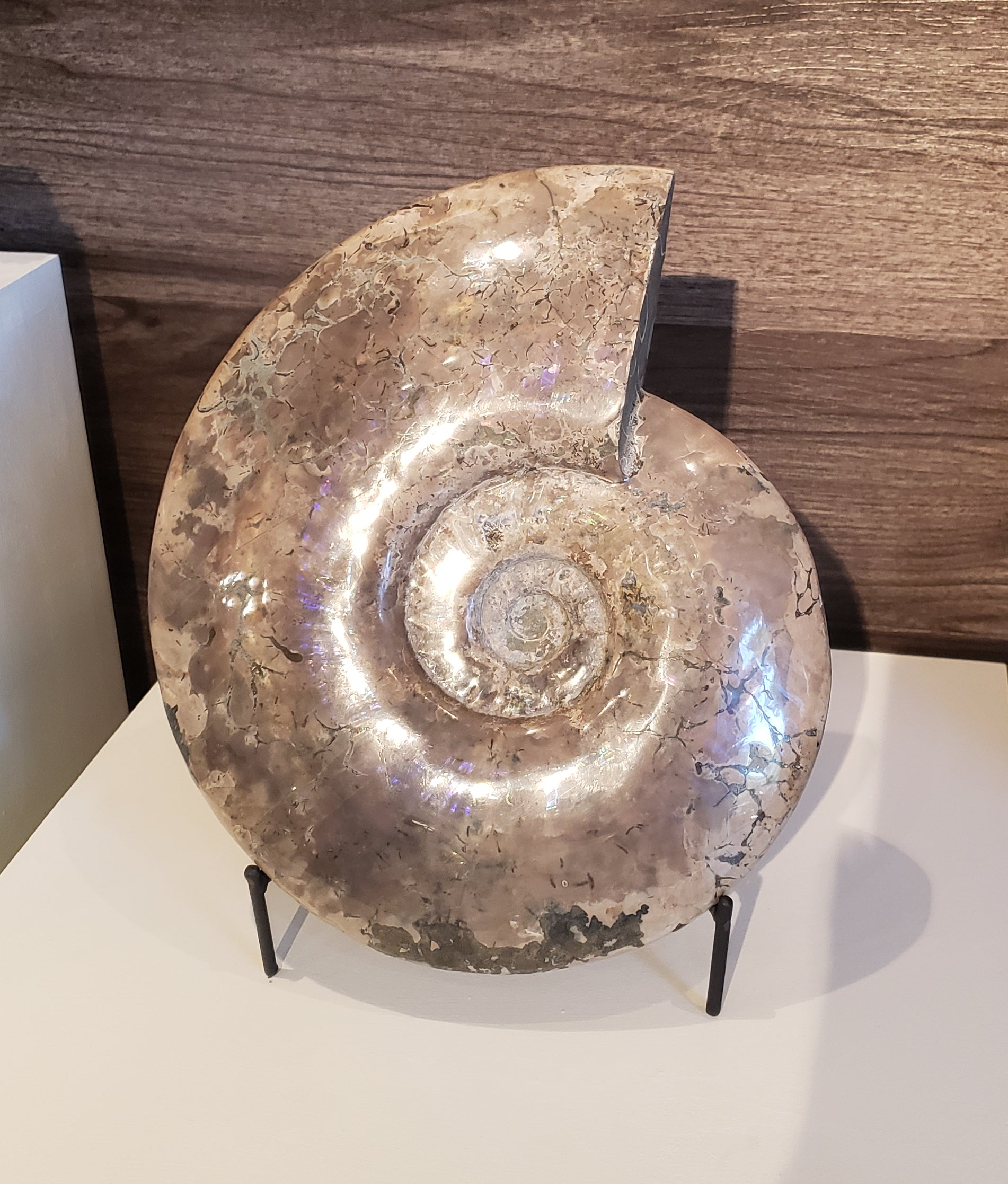 Large Opalized Ammonite Fossil from Madagascar