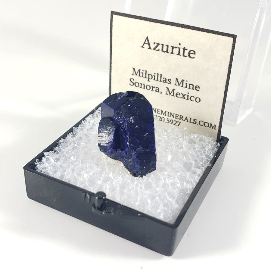 Azurite Crystal Thumbnail Specimen from Milpillas Mine Mexico