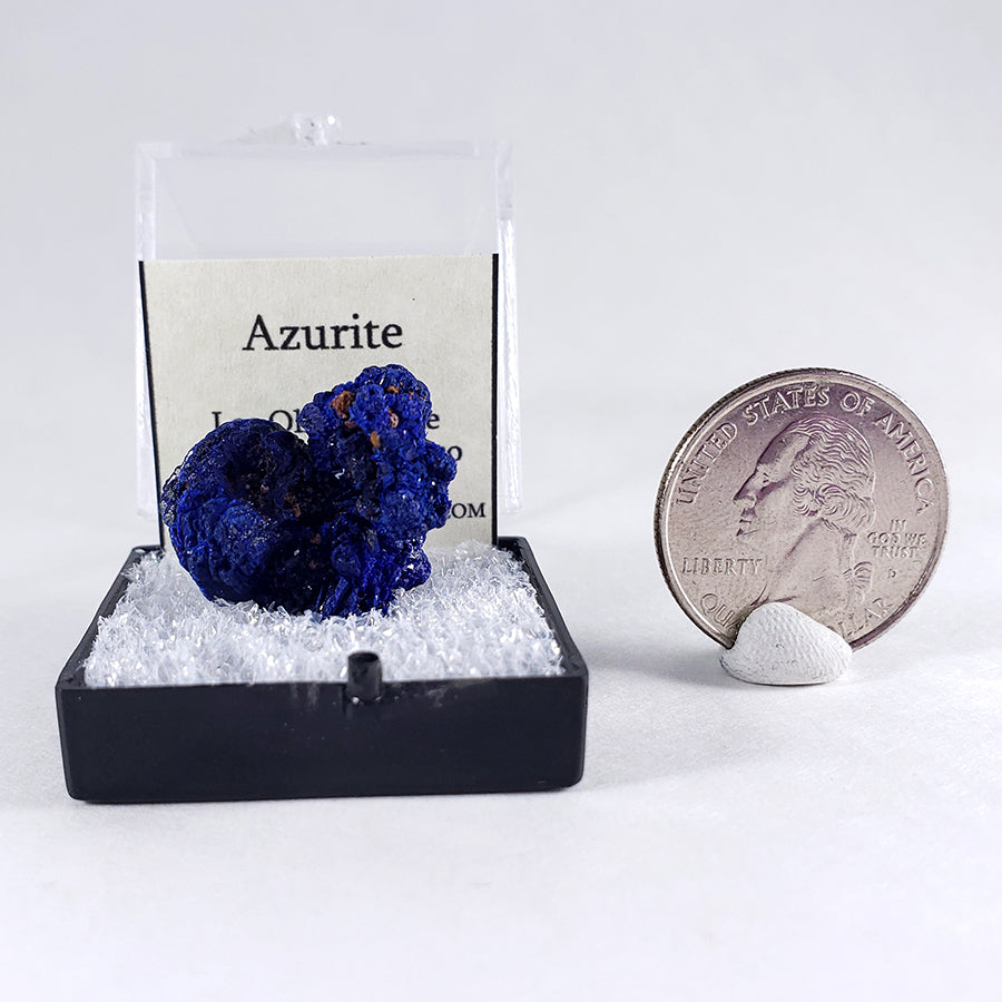 Azurite Thumbnail Specimen from Los Olivos Mine, Chihuahua, Mexico