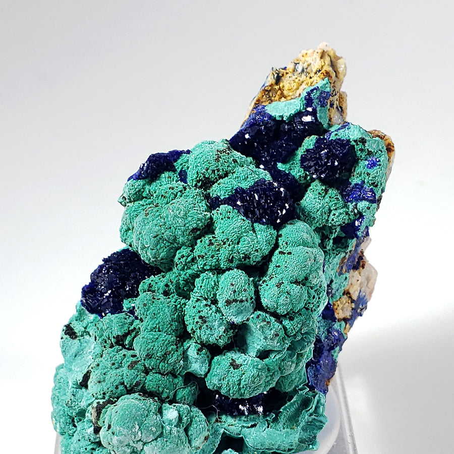 Azurite on Malachite from Morenci Mine, Arizona