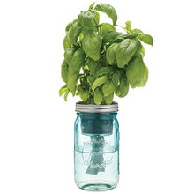 Load image into Gallery viewer, Modern Sprout Garden Jar, Basil