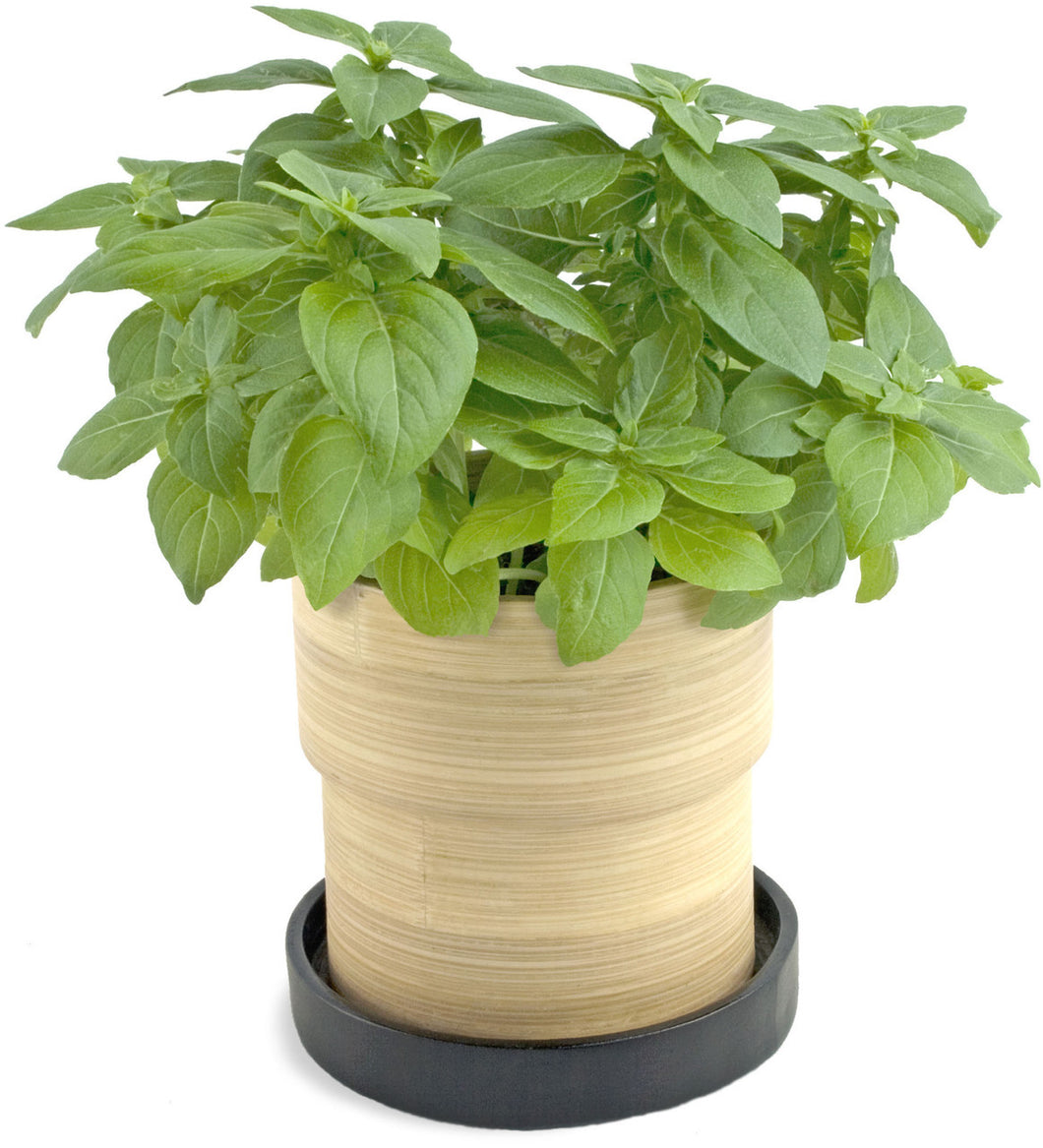 Bamboo Grow Pot