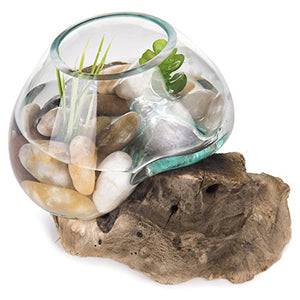 MyGift Small Natural Driftwood & Clear Molten Glass Bowl Plant Terrarium, Home Tabletop Decor Vase