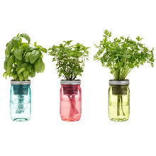 Load image into Gallery viewer, Kitchen Herb Kit – Three Self-watering Indoor Planters with Organic Basil, Organic Parsley, and Non-gmo Mint Seeds.