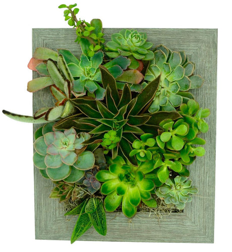 Portrait Gardens Wall Planter (8x10) - Instant Vertical Succulents Herbs Indoor Garden DIY Picture Cactus Plastic Ready to Hang Pin Plant Display Water