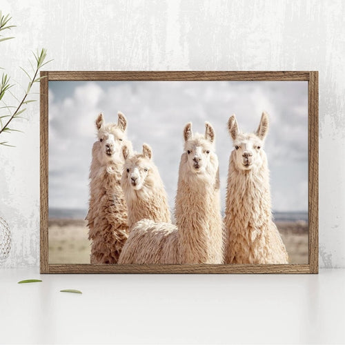Funny Animals Llama Poster Canvas Prints Animal Alpaca Black White Photography Painting Pictures Boho Nursery Wall Art Decor