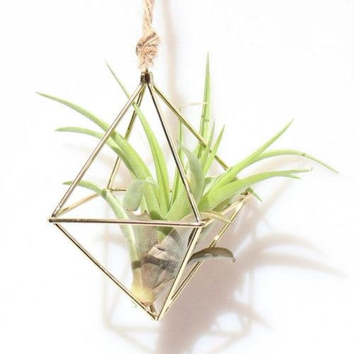Wall Freestanding Hanging Tillandsia Air Plants Rack Rustic Metal Iron Wrought Geometric Diamond Shape Air Plant Holder