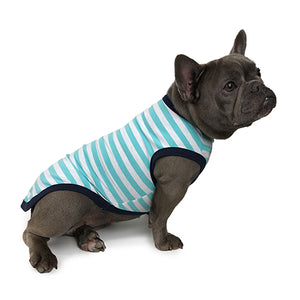 Dog with Aqua Stripe Huskimo T-shirt on