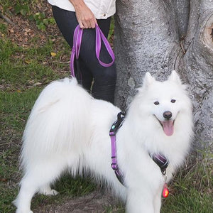 Dog wearing Huskimo TrekPro Lead and Ultimate Harness in Aurora (Purple)