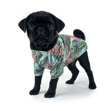 Pug Puppy wearing Huskimo Maui t-shirt