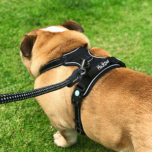 Bulldog wearing Huskimo Dark Sky Ultimate Harness