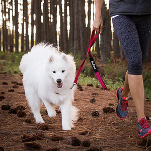 Dog wearing Huskimo TrekPro Lead in Uluru (Red)