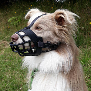 Dog with Huskimo Freedom Muzzle on